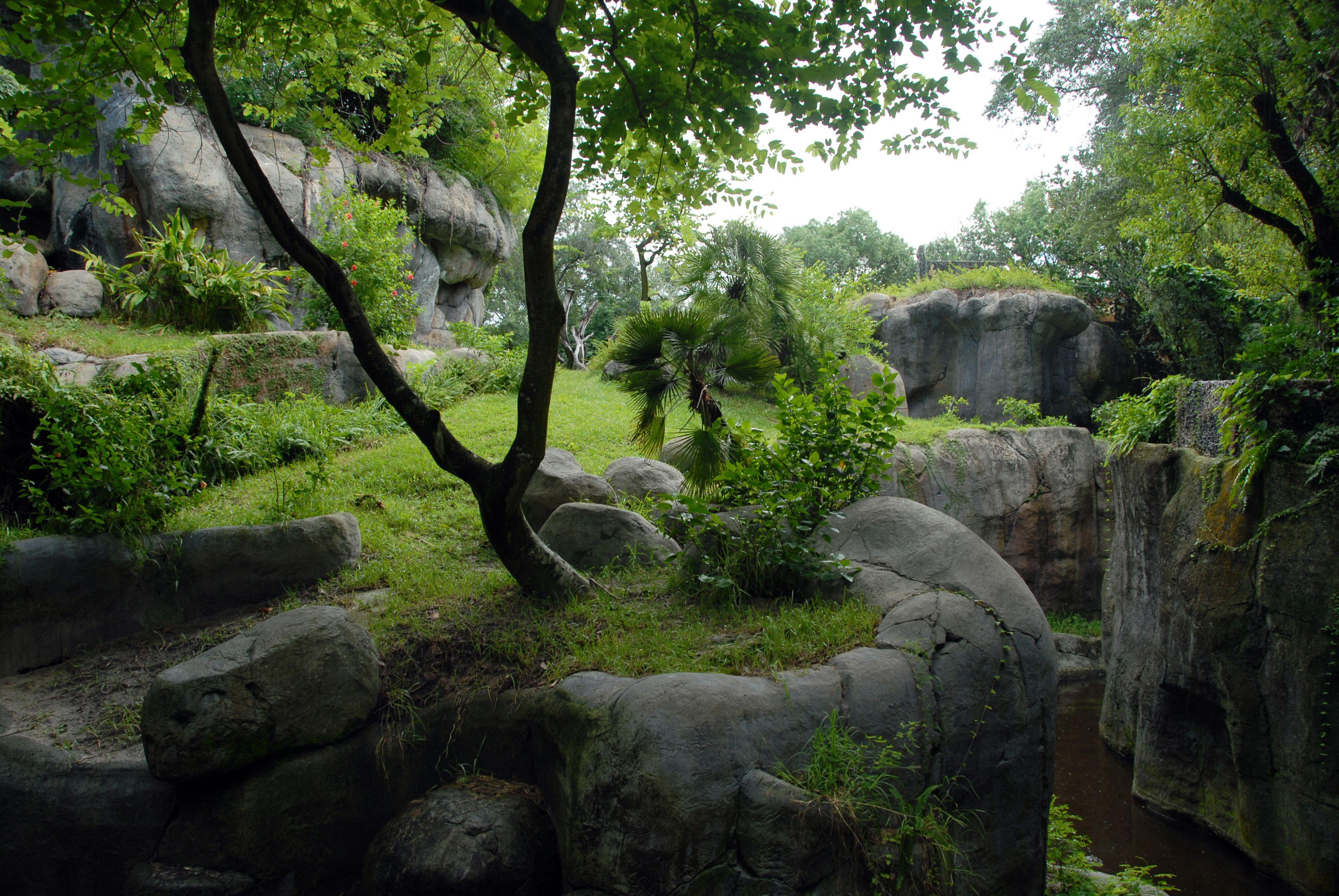 High Definition Nature Green Dream Hd 3872x2592 Jungle Wallpaper