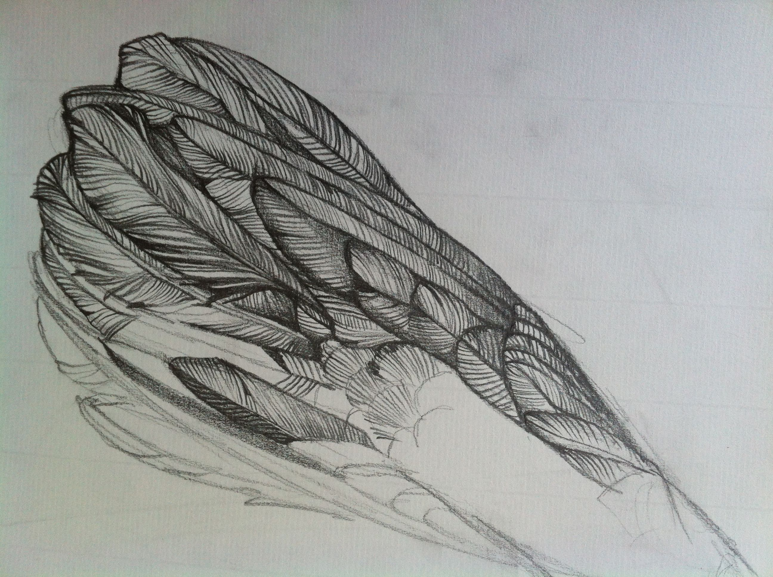 Line Drawing Feather : Feather cluster g  feathers
