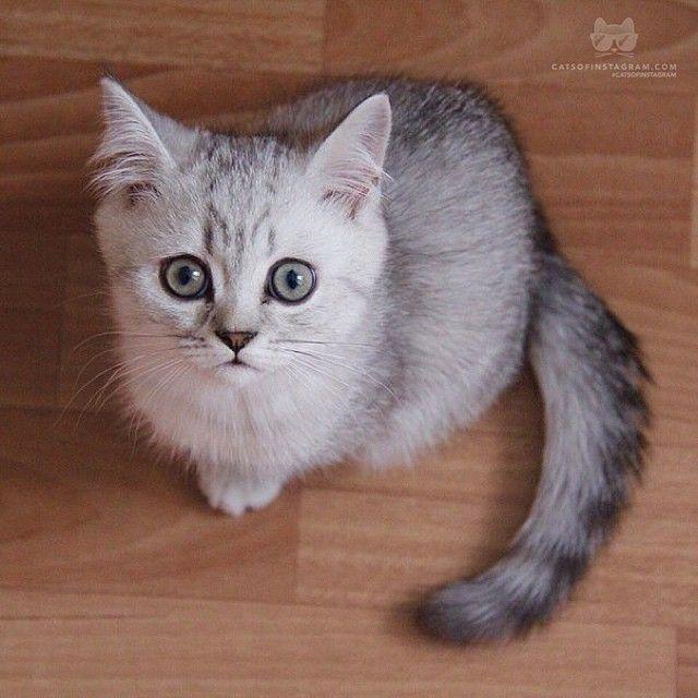 From Theshanticat Hey There Catsofinstagram Cat