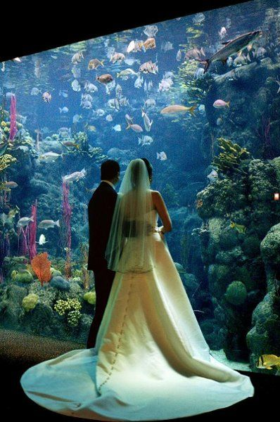 The Florida Aquarium Wedding Ceremony Reception Venue Tampa St