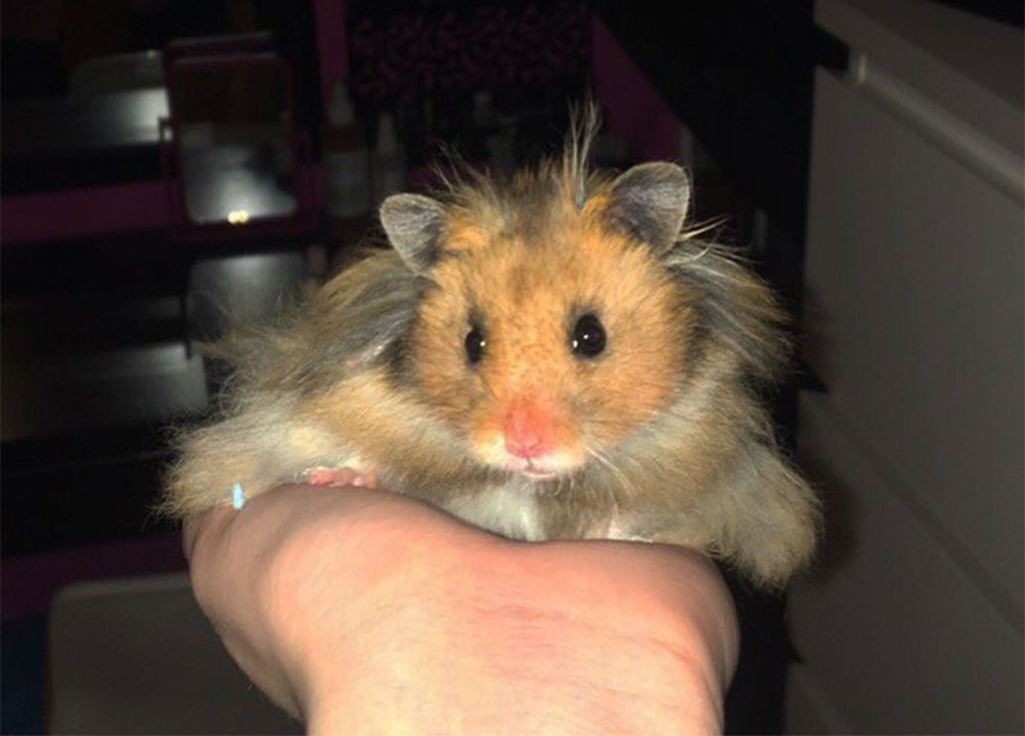 Twitter Is Obsessed With A Little Hamster Who Loves His Tiny Dog