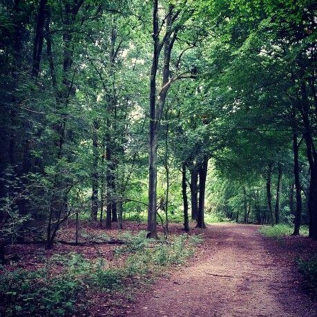 Forest walk ♡