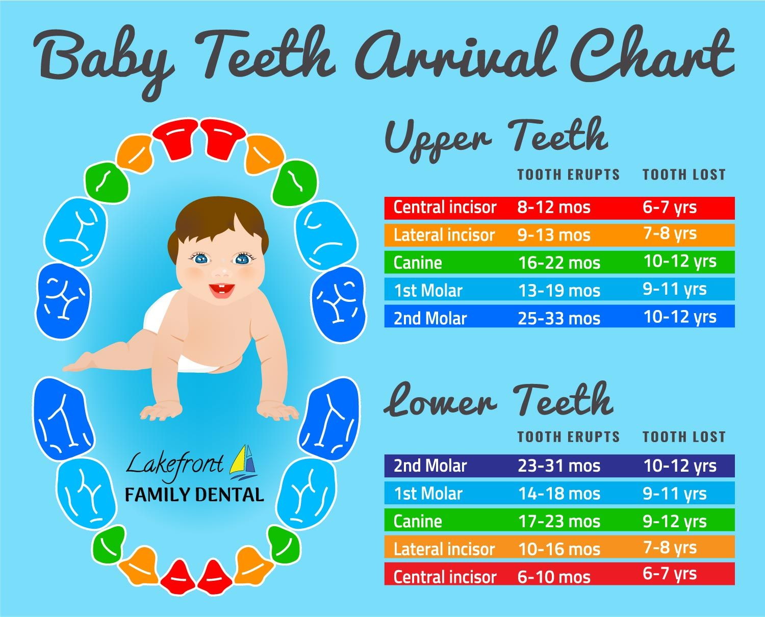 Baby teeth arrival chart when do baby teeth erupt and at