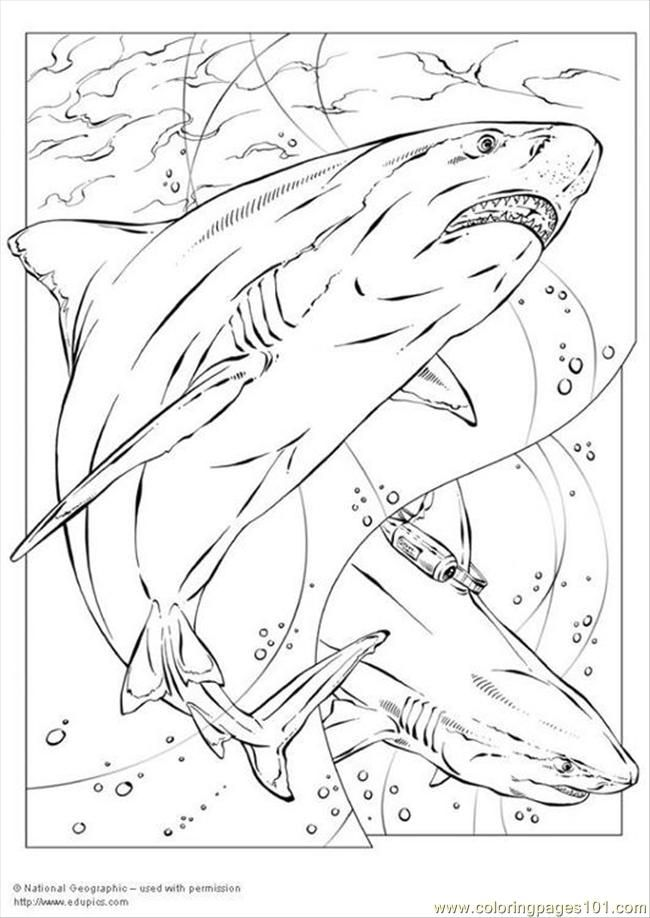 Bull Shark P5735 Coloring Page Free Printable Coloring Pages Shark Coloring Pages Coloring Pages Animal Coloring Pages
