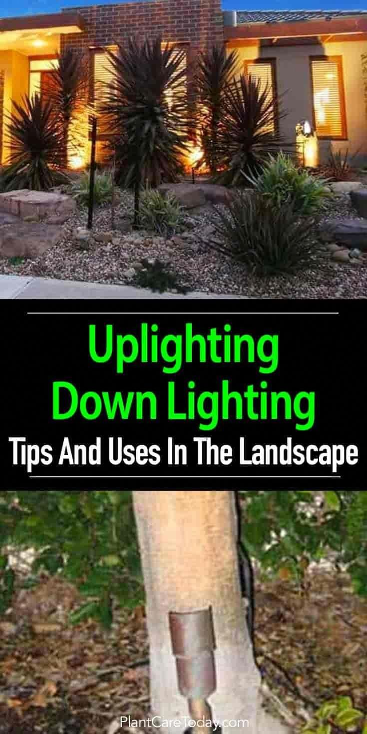 Using Uplighting And Down Lighting in The Landscape Garden
