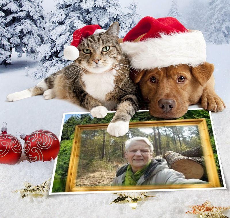 Foto effecten. Hond en kat wensen u een vrolijk kerstfeest