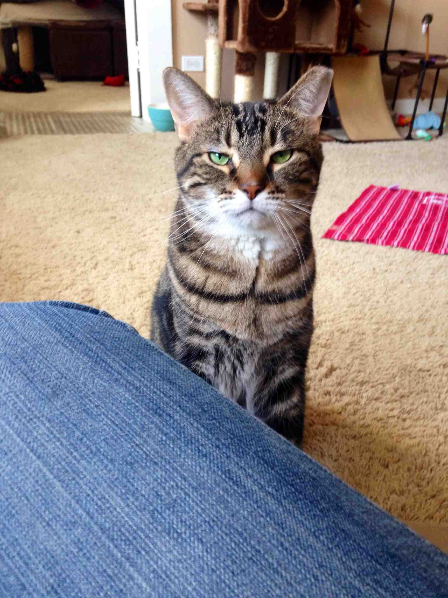 Cats don't beg for food. They sit patiently while you