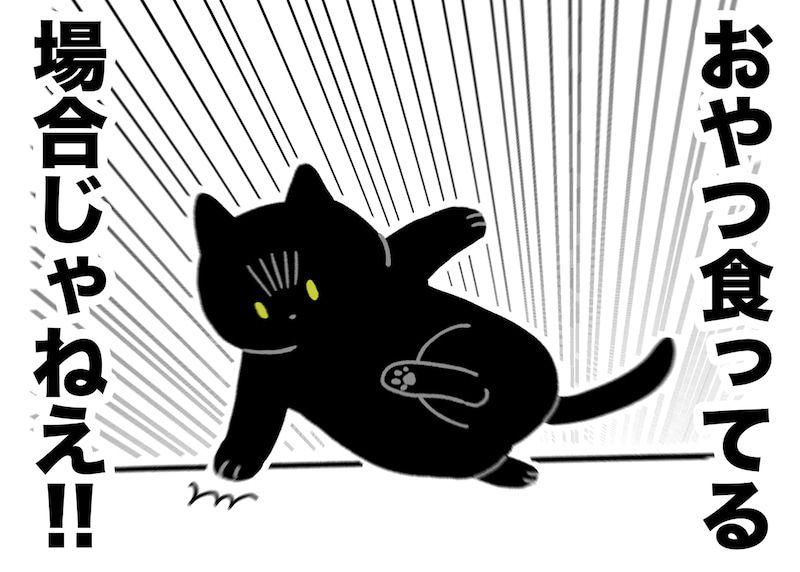 ワクチン打ちに動物病院行ってきた 動物 黒猫 ねこ
