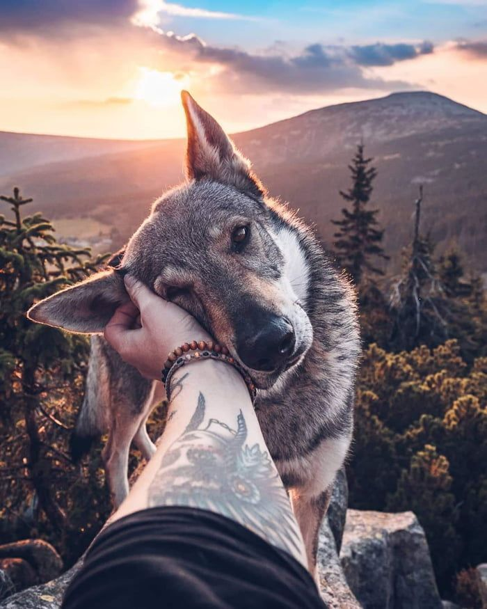 This dog always posts for pictures and travels with his owner everywhere.