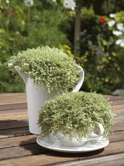 Grow Small Plants In Old Teacups And Make A Great Patio Centerpiece    #DIYGardenIdeas