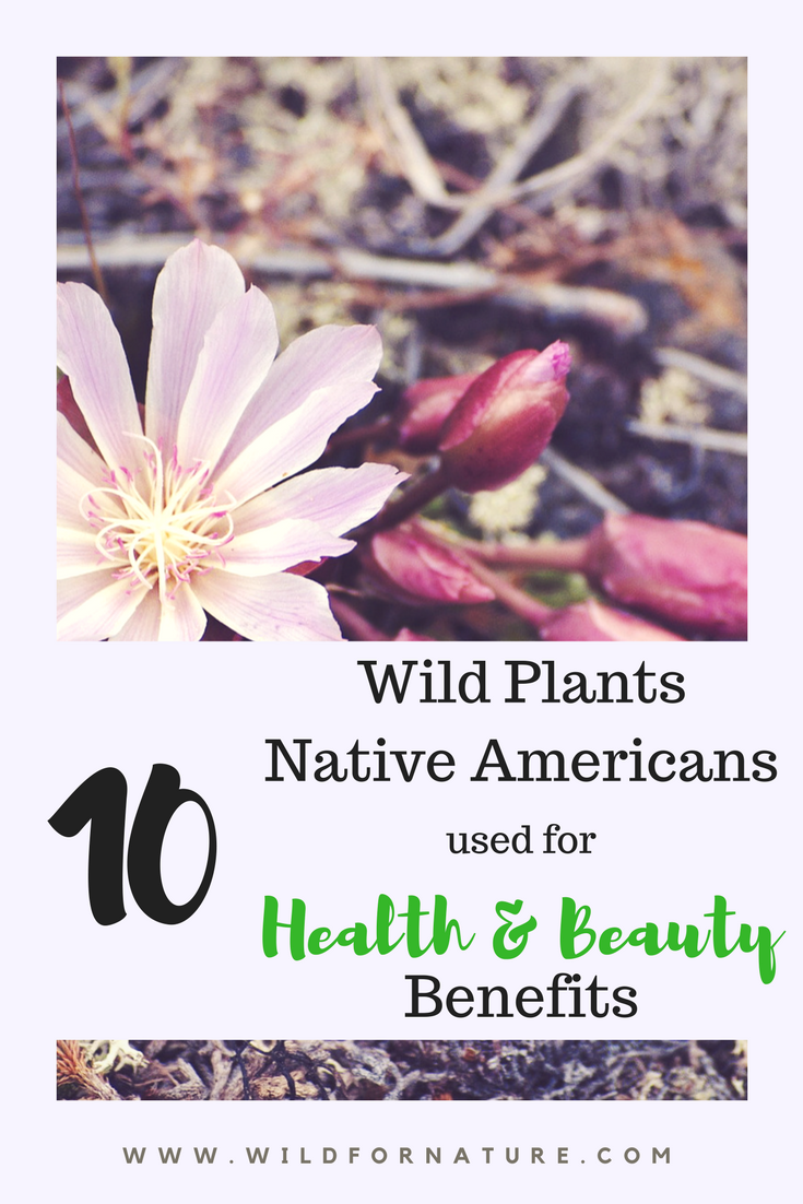 Top 10 Forgotten Wild Plants Native Americans used for their