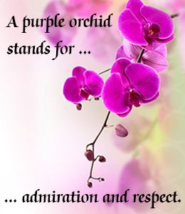 Orchid Flower Meaning And Symbolism A Really Interesting Read