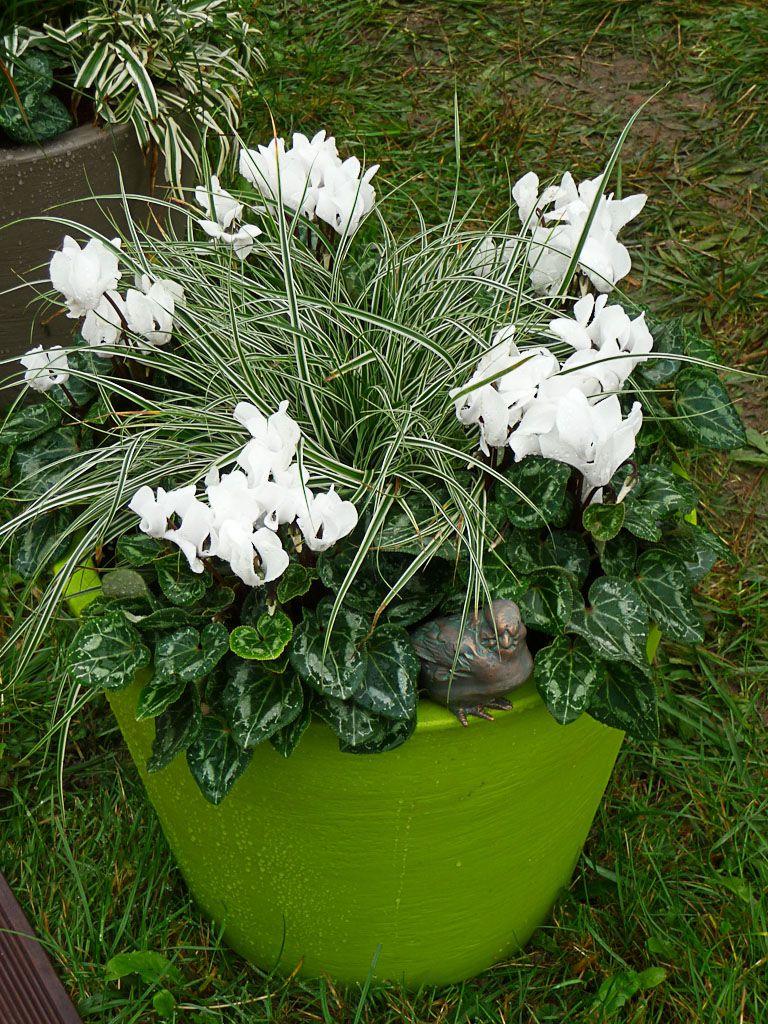 Pot e d automne et d hiver en vert et blanc http www for Composition florale exterieur hiver