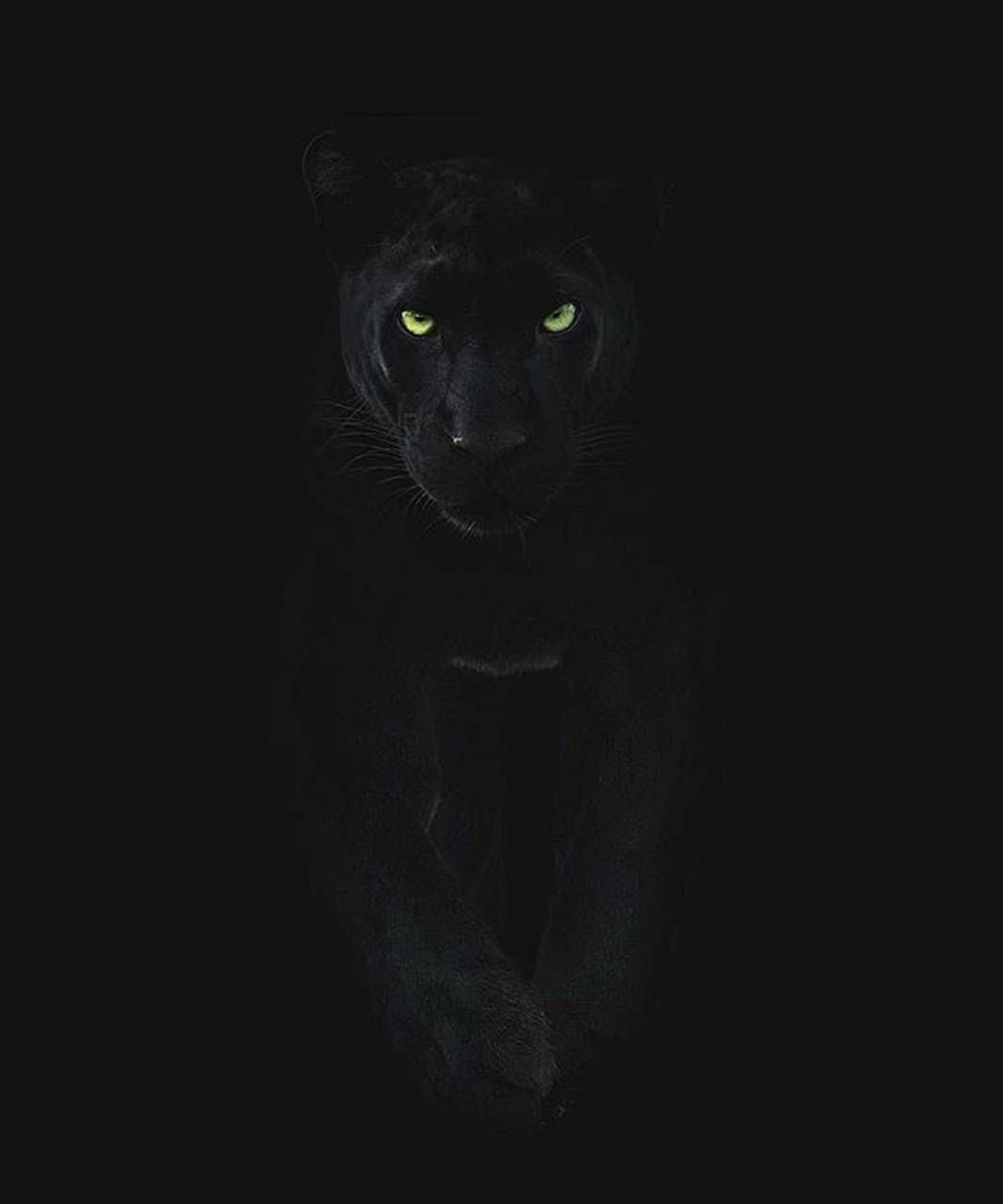 Black puma wallpaper by PjB2708 - dc - Free on ZEDGE™