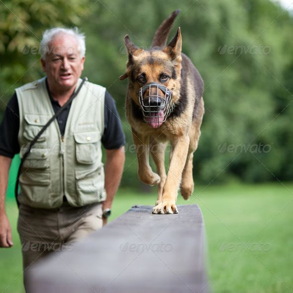 Master And His Obedient German Shepherd Dog At A Dog Training