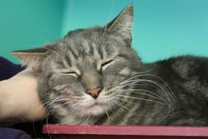 Update: Adopted :-) Dusty Miller has been adopted from the Seattle Humane Society