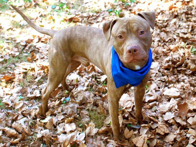 SIMON A1048258 I love dogs, Animal lover, Homeless pets