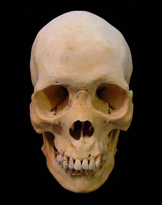 Human Skeleton Head Carls Blog Yo Very Good Allah Destroy
