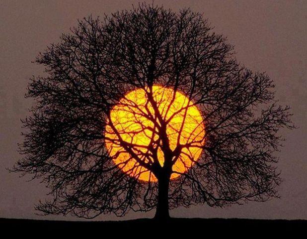 Фото Дерево с голыми ветками на фоне заходящего солнца ...
