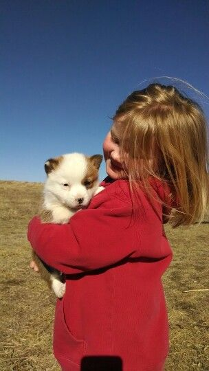 Mismark Corgi Is Adorable Dogs And Kids Animals Friends Cute Animals