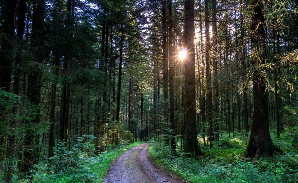 Gambaran Pemandangan Hutan Lukisan Atas Pemandangan Yang Akan Ditampilkan Ini Adalah Ilustrasi Dari Beberapa Alam Yang Ada Di Selur Di 2020 Pemandangan Gambar Hutan