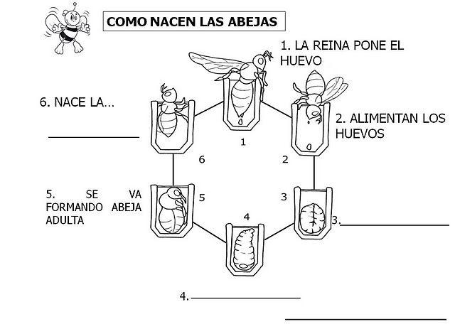 As abellas - Arcodavella - Álbumes web de Picasa