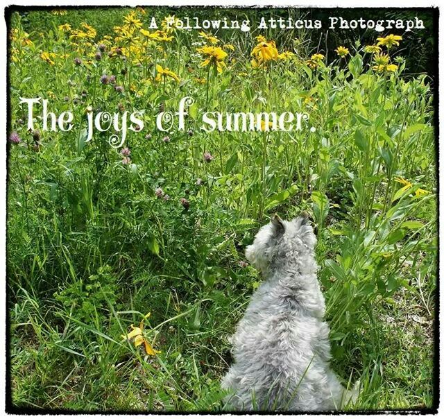 Will and the joys of summer