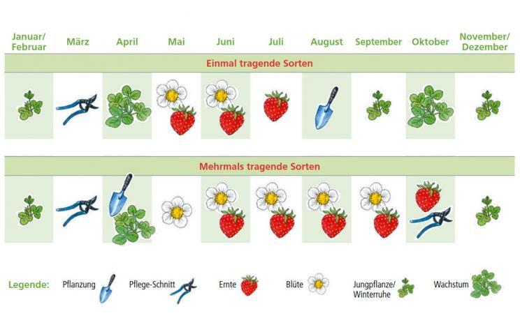 40++ Erdbeeren pflanzen im september ideen