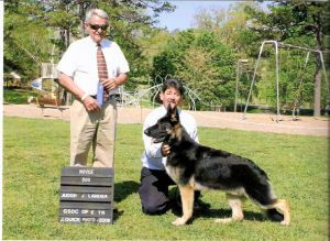 Sires And Dams Our Breeding Stock Dam Dogs German Shepherd