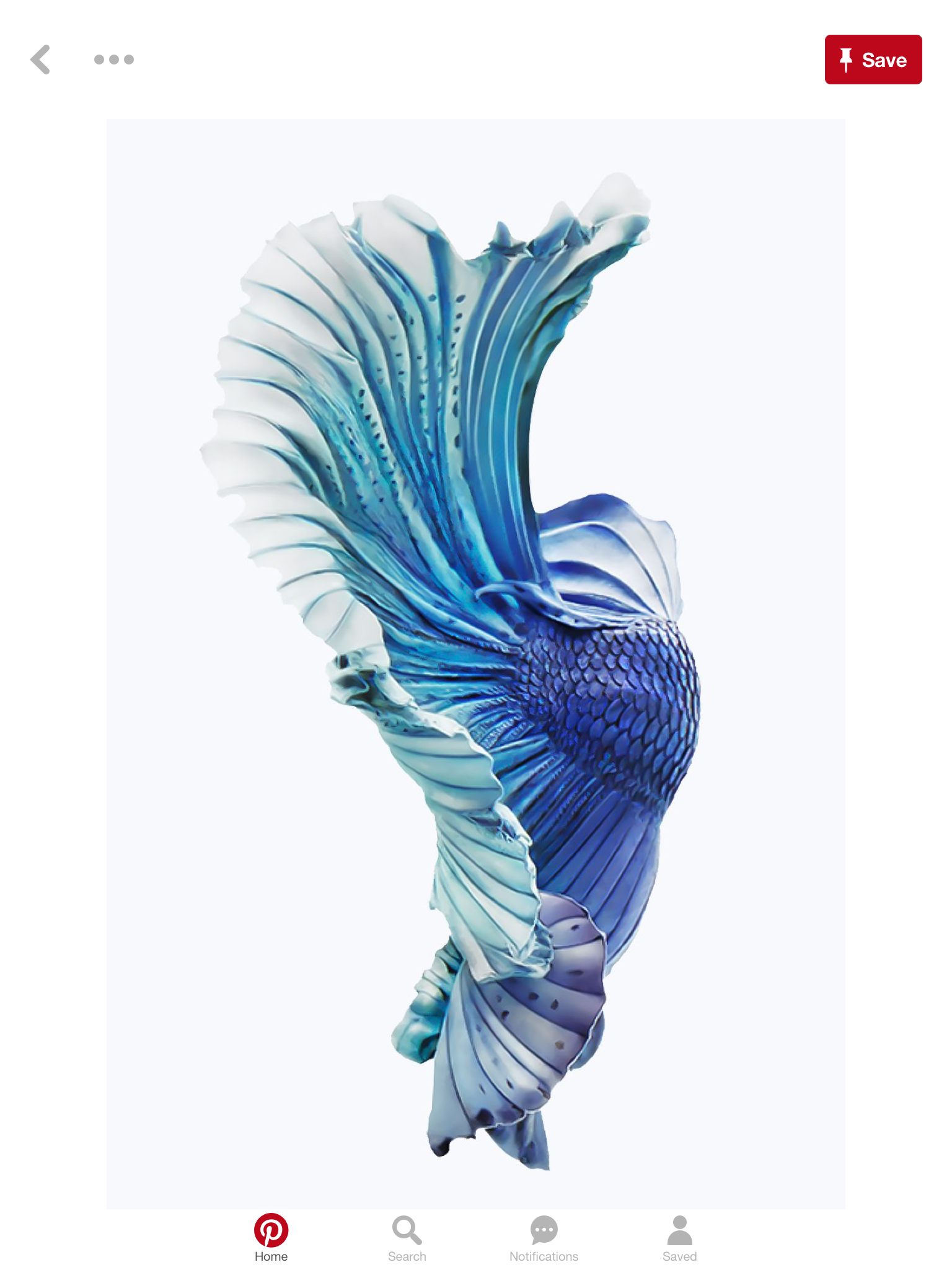 Fish wallpaper iphone image by Caroline Wildermuth on
