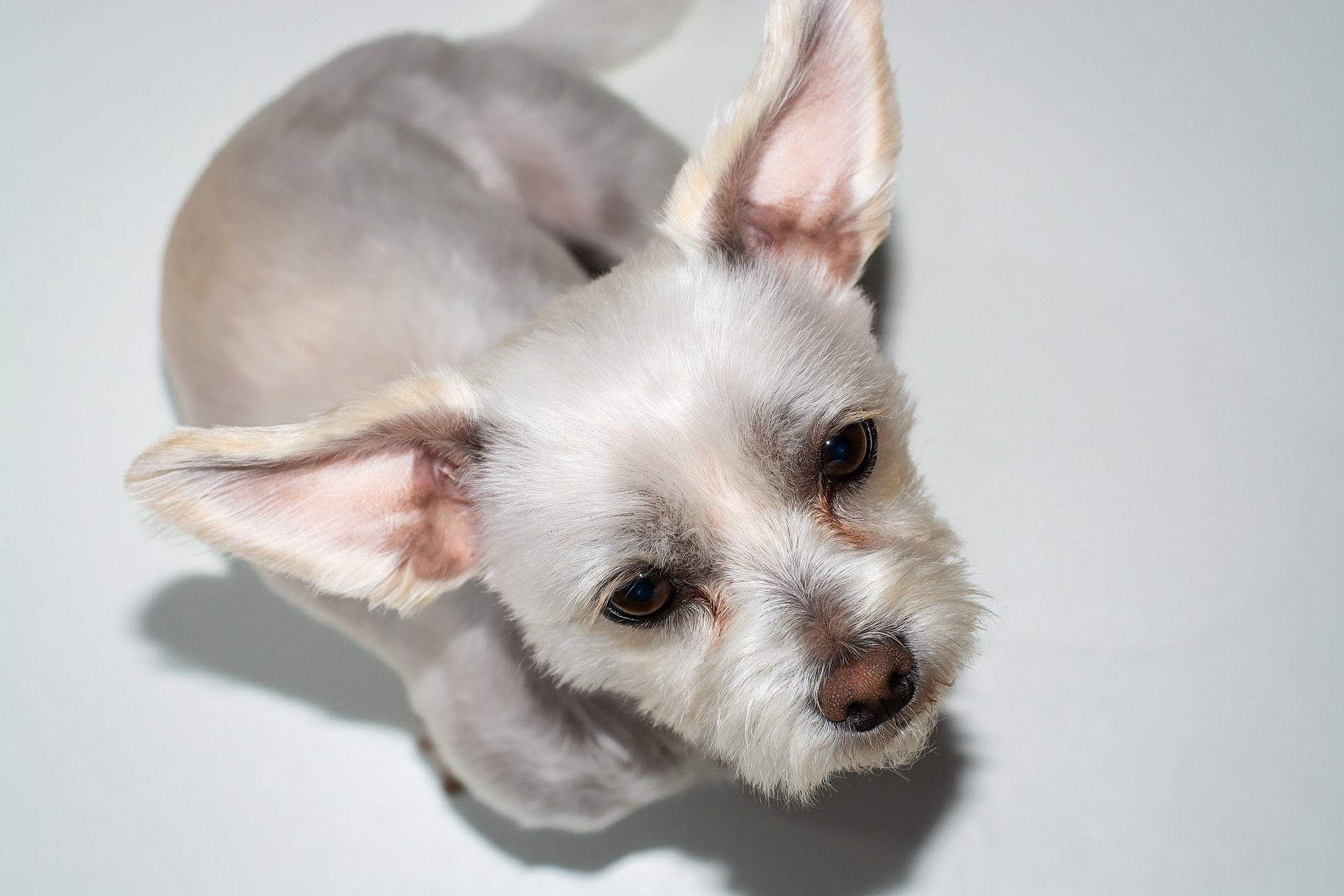 Is it safe to use olive oil or peroxide to clean dog and