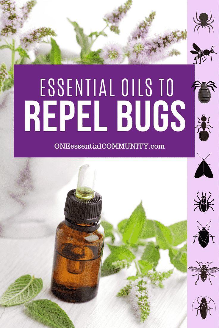 Top 10 Essential Oils That Repel Bugs Bug Spray Recipe