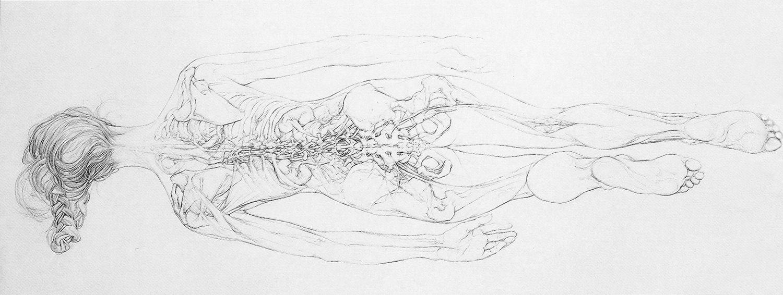 Sarah Simblet - drawing | artist - artisan - designer | Pinterest ...