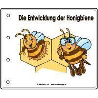 Projekt Bienen Kindergarten Und Kita Ideen Bienen