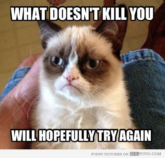 Grumpy Cat What Doesnt Kill You Funny QuotesFunny AnimalsCutest