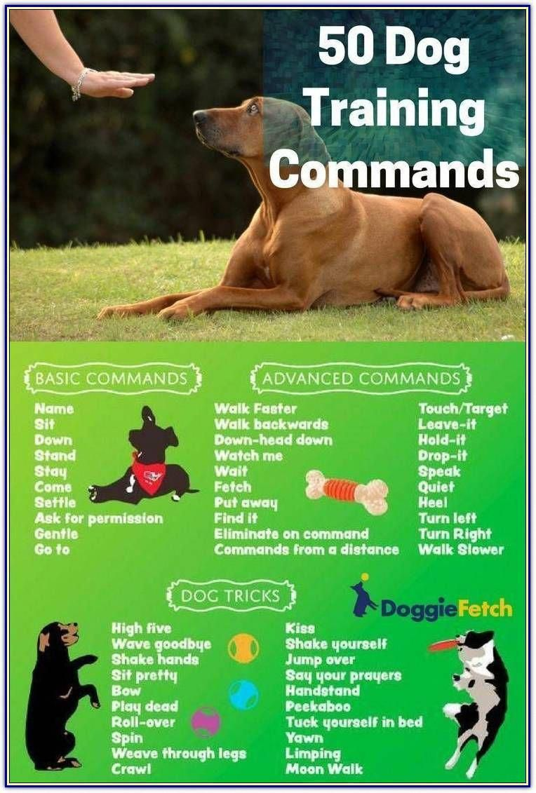 Beautiful Coordinated How To Train Your Dogs Join The Waiting List In 2020 Online Dog Training Dog Training Dog Training Obedience