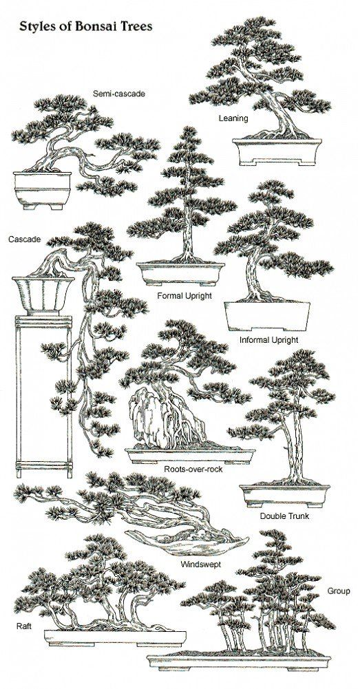 work, growing and crafting your own bonsai is more doable than you might think! | Source
