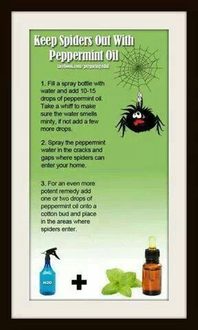 Non Toxic Spider Remedy Oils Cleaning Essential Oils