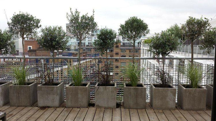 Terrasse Gestalten Mit Olivenbäumen In Beton Kübel | Balkon ... Terrasse Gestalten Olivenbaum