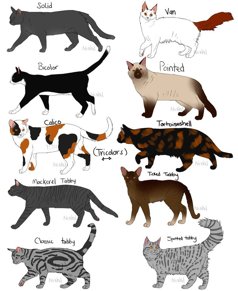 Cat Color Patterns Awesome Inspiration Ideas