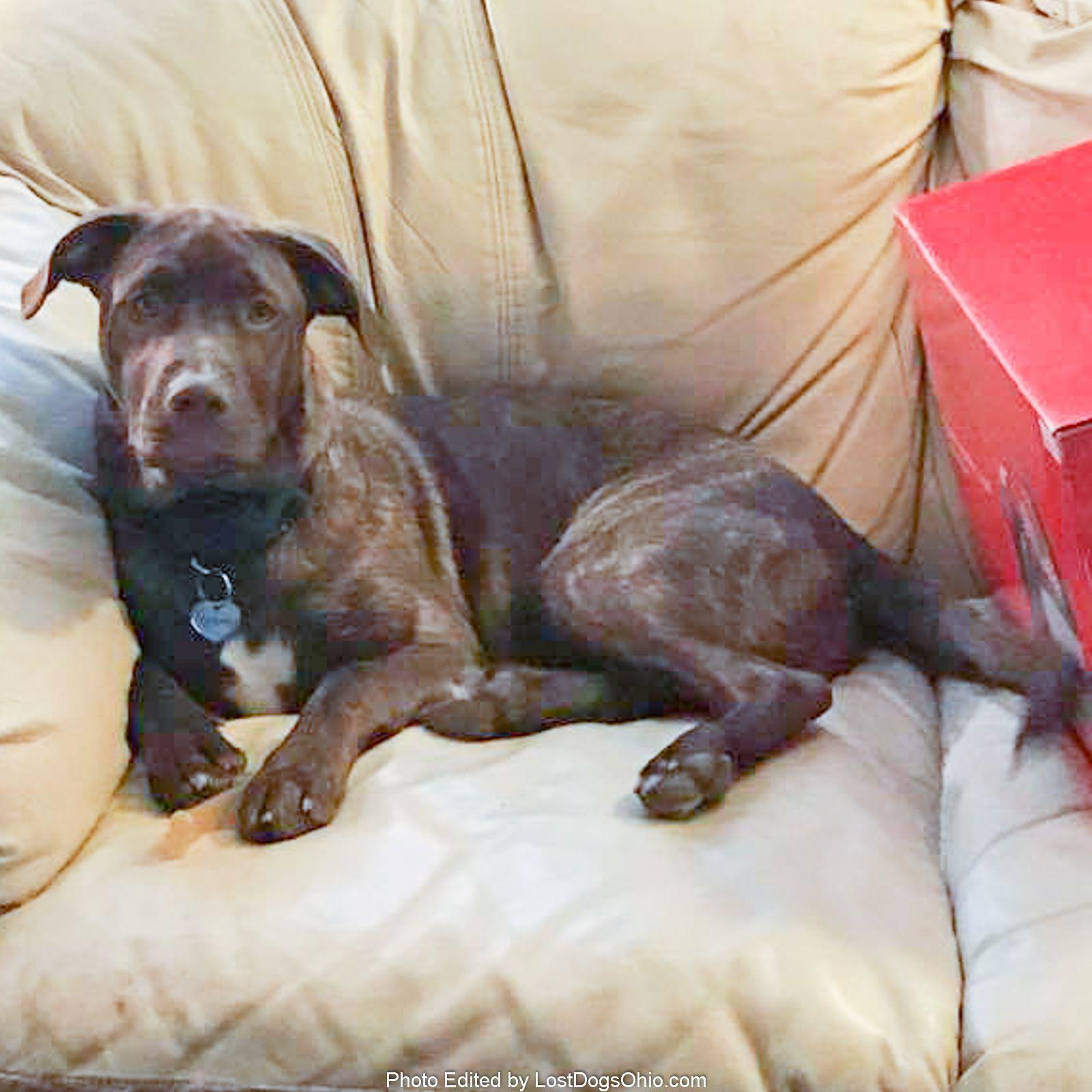 Lost Dog Male Ravenna Oh Usa 44266 Losing A Dog Dog Mixes