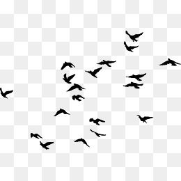 Black Simple Bird Decorative Pattern No Dig Png Decorative Pattern No Dig Png Flock Birds Black Clipart B Photoshop Backgrounds Png Graphics Photoshop Textures