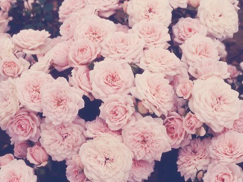 Pink flowers tumblr google search funny pinterest flowers pink flowers tumblr google search mightylinksfo