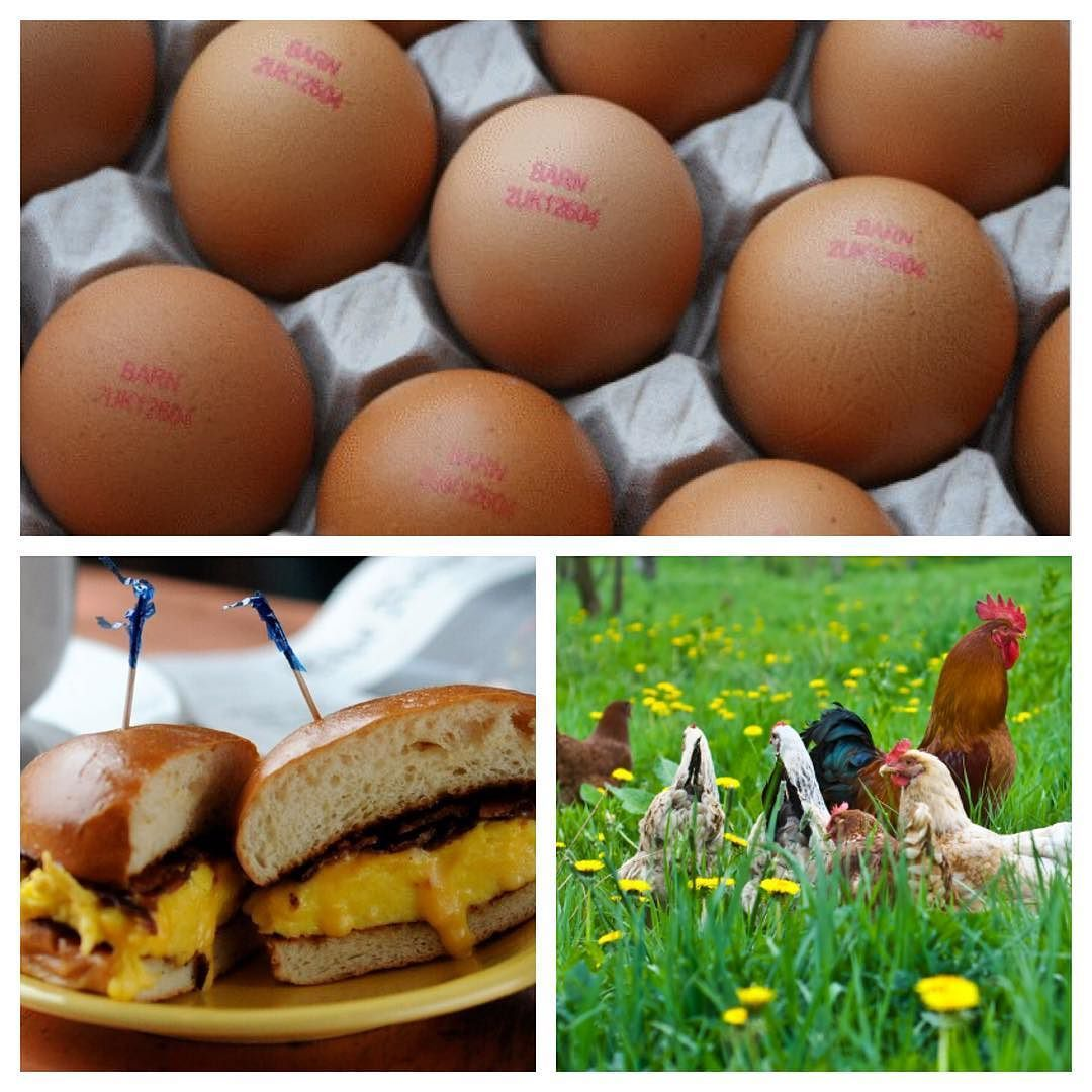 Since January Hampton Coffee Company has been using 100% cage-free eggs company-wide! Enjoy #eggs from humanely treated and #happy chickens every time you visit one of our #local cafés!  #eatlikealocal #cagefree by hamptoncoffee