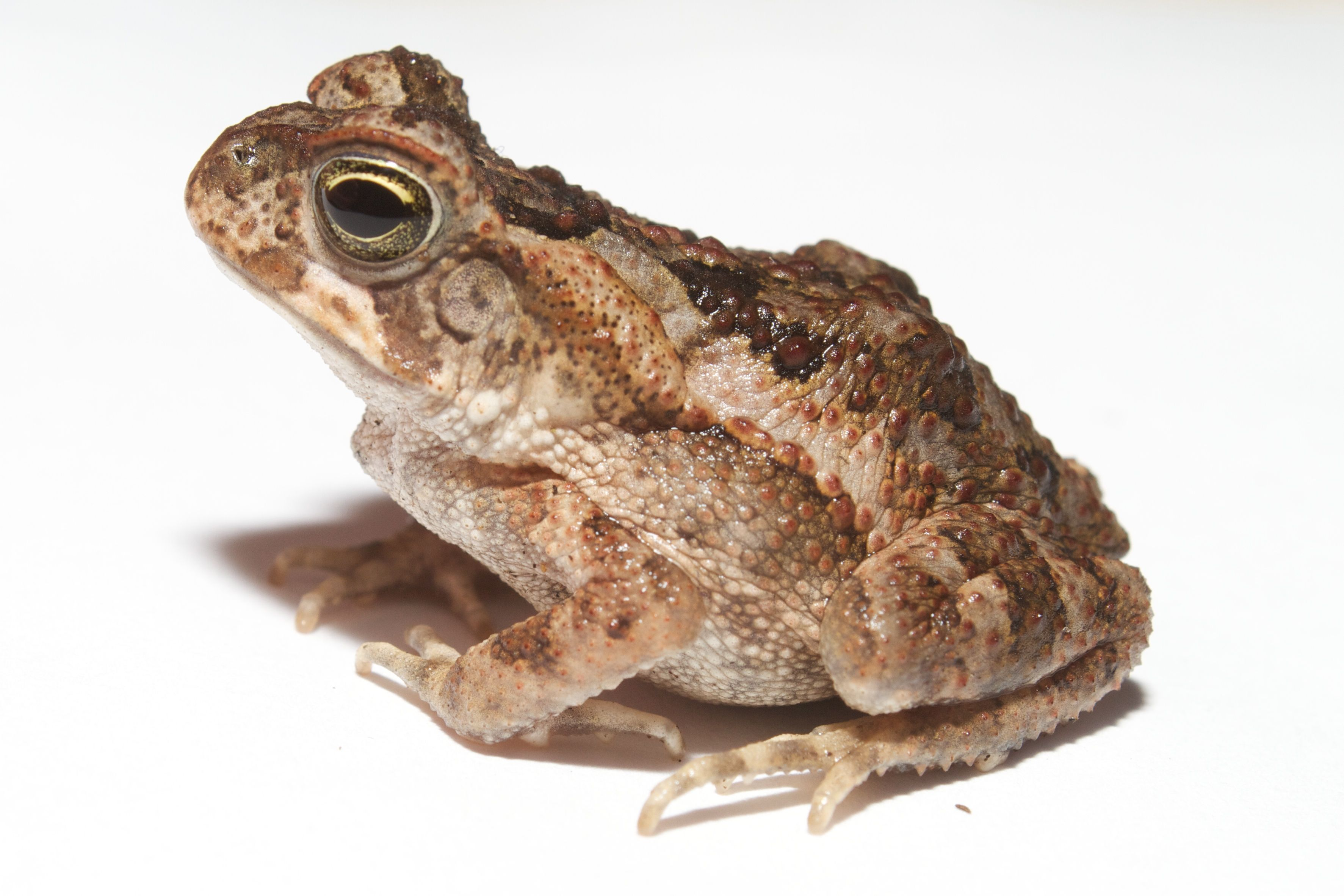 All about frogs