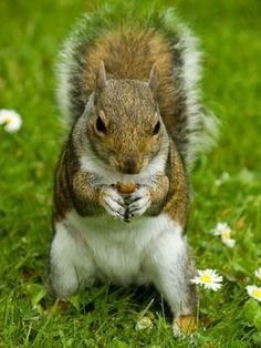 Homemade Squirrel Repellents That are Non lethal But