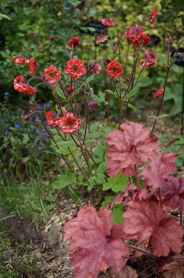 Le Jardin de Patou, fleurs