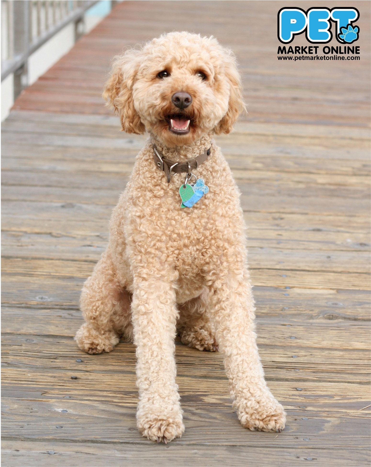 Sunday S Dog Show Winner Is Labradoodle Www Petmarketonline Com A Labradoodle Is A Crossbred Dog Created By Cross Labradoodle Dogs Labradoodle Poodle Puppy