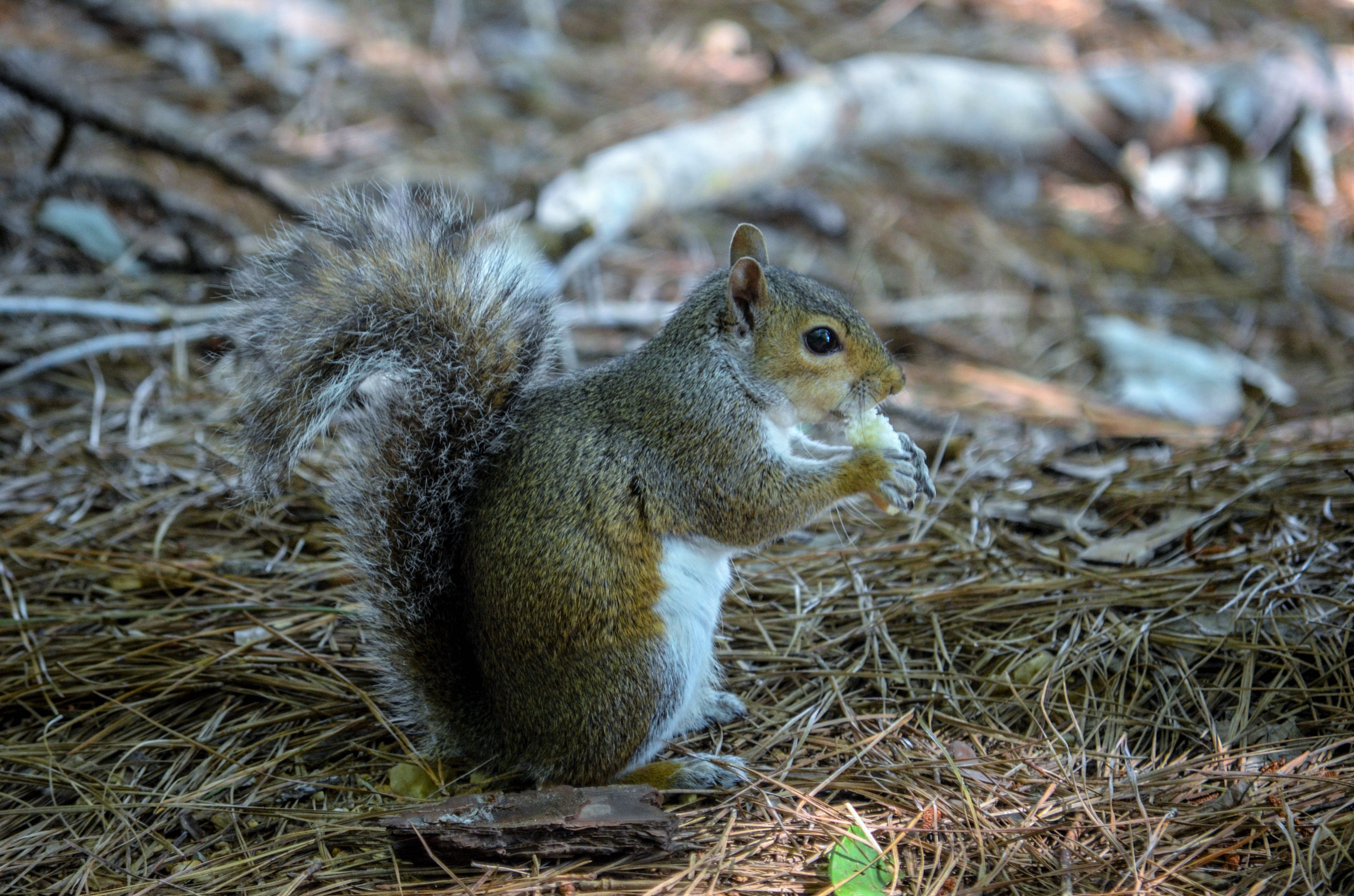Where squirrel lives in nature 69