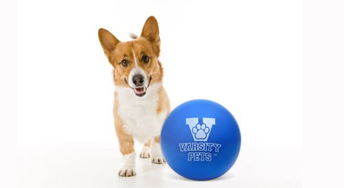 Junior Varsity Ball Wholesale Eight Pack Varsity Pets Dog